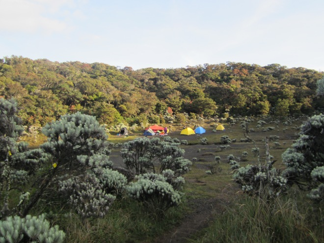 Mandalawangi Camping Ground