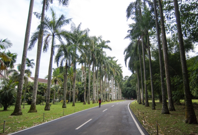 Palm Tree Road