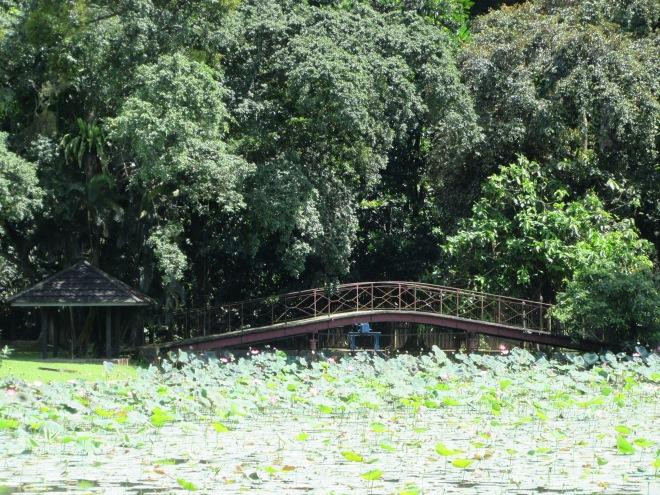 stellycious-bogor-botanical-garden-9