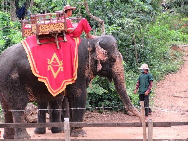 stellycious-cambodia-22